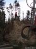 Forstarbeiten/Windbruch_10