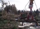 Forstarbeiten/Windbruch_11