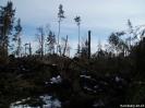 Forstarbeiten/Windbruch_1