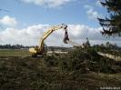 Forstarbeiten/Windbruch_3