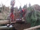 Forstarbeiten/Windbruch_5