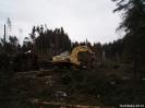 Forstarbeiten/Windbruch_6