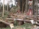 Forstarbeiten/Windbruch_7