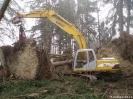 Forstarbeiten/Windbruch_8